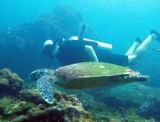 Thaimaan parhaat sukelluspaikat