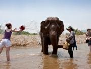 pailla-norsujen-kanssa