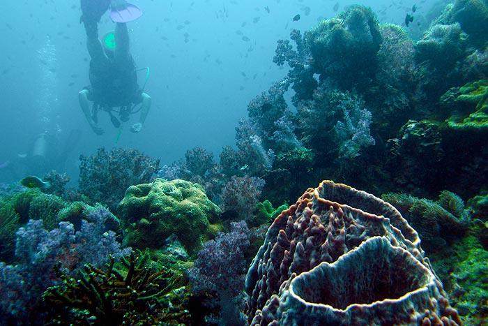Sukellus Thaimaa