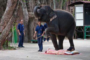 Sri Racha Tiger Zoo Pattaya
