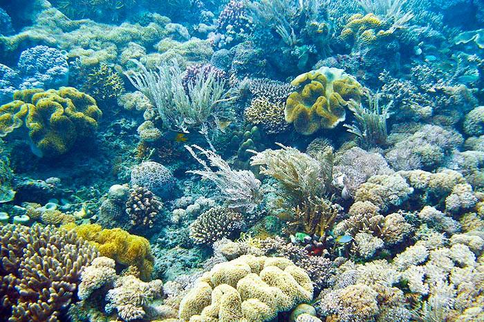Koralliriutta Thaimaa