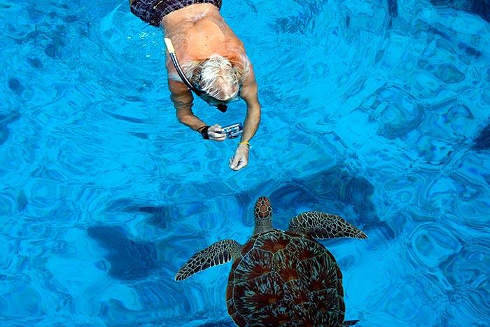 Ko Similan Thaimaa kilpikonna