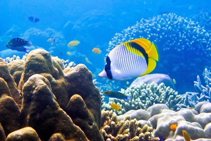 Thaimaa sukella ja snorklaa