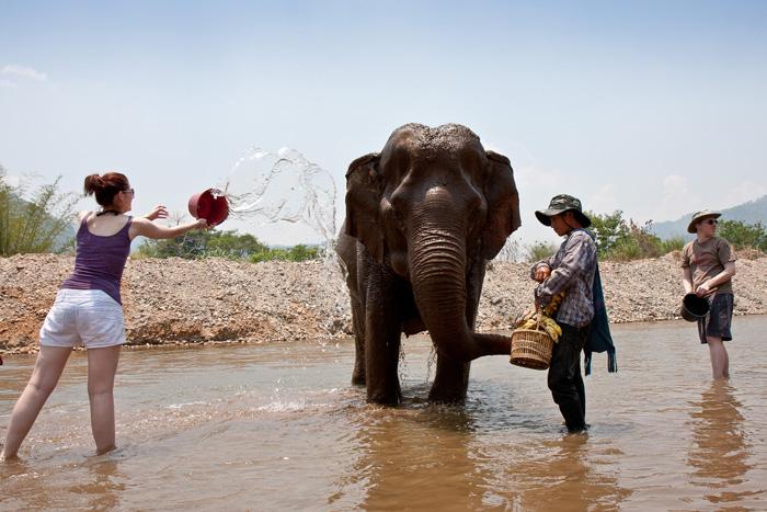 Thaimaa norsut