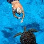 snorklaaja-ja-kilpikonna-pieni