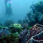 sukella-thaimaassa-pieni