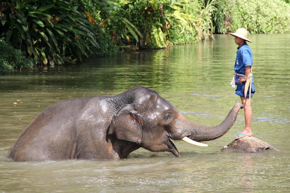 lampang norsu